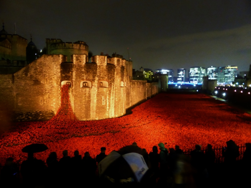 Tower of London poppies night